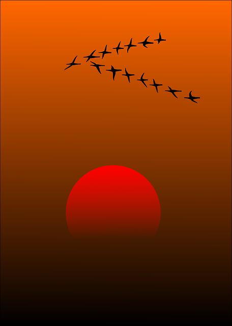 Migratory Birds, Birds, Sunset, Sun, Beautiful, Idyll