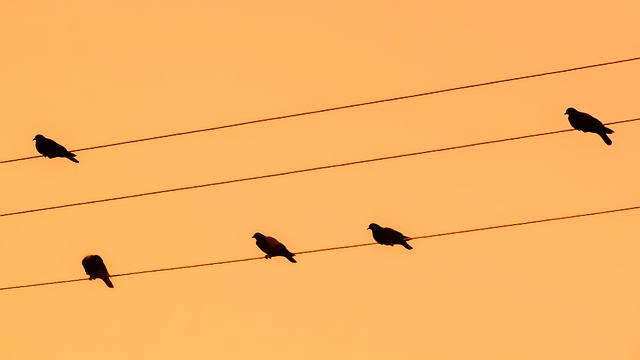 Birds, Wire, Pigeons, Sunset, Orange, Nature