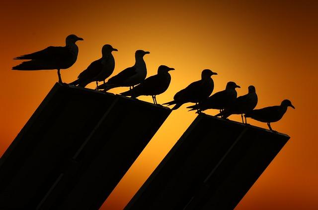 Seagulls, Backlight, Birds, Bird, Sunset