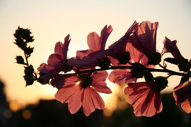 Flower, Spring, Branch, Blossoms, Sunset