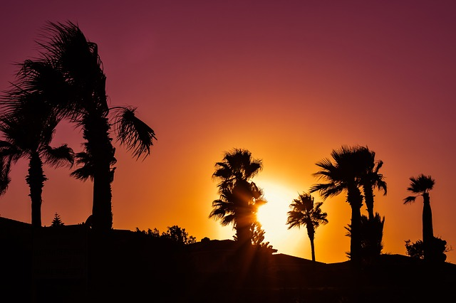 Palm Trees, Sunset, Colors, Shadows, Silhouettes