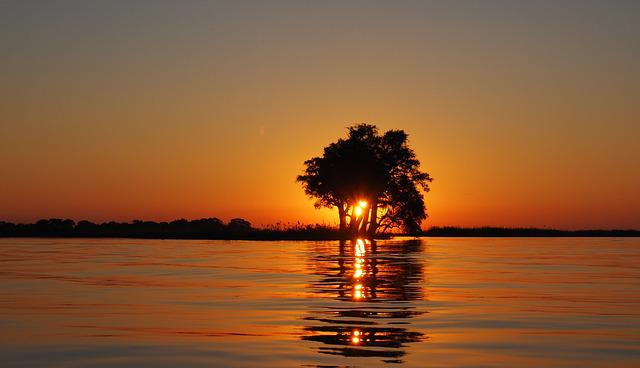 Sun, Sunset, Dawn, Trees, Water, Water-level