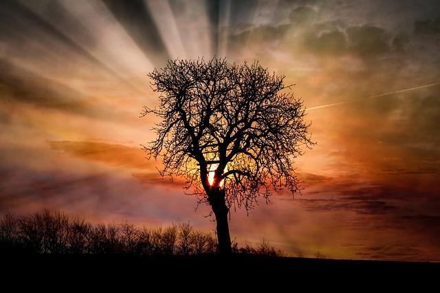 Dawn, Sunset, Tree, Sun, Landscape, Nature, Sky, Dusk