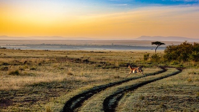 Antelope, Sunset, Kenya, Dusk, Mammal, Africa