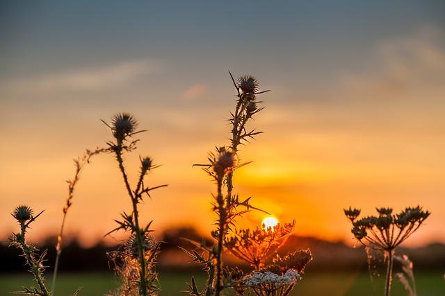 Sunset, Autumn, Abendstimmung, Nature, Evening Sky