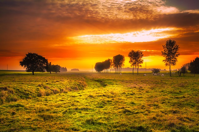 Sunset, Field, Meadow, Cattle, Cows, Farm, Colors