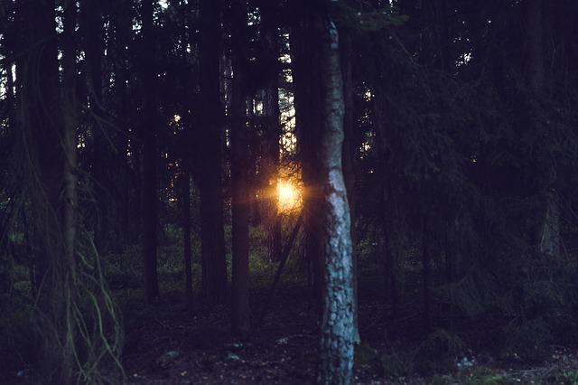 Sunset, Rays, Light, Forest, Mood, Sun, Nature