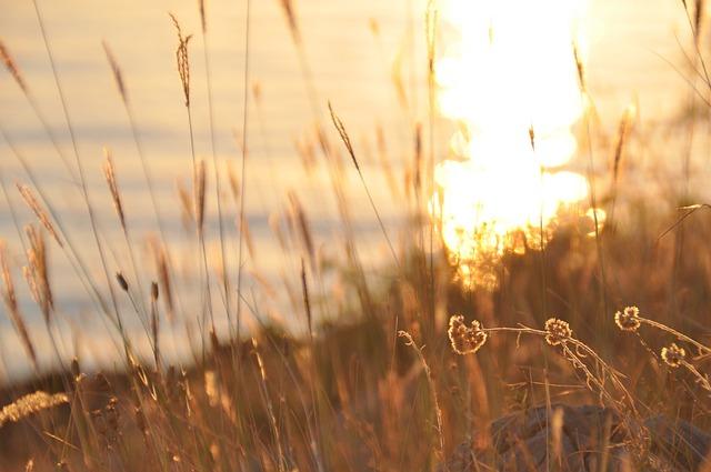 Abendstimmung, Sunset, Halme, Blade Of Grass, Dusk
