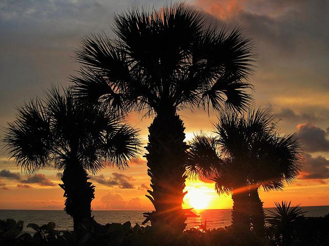 Sunset In Florida, Fan Palm, Atmospheric, Caribbean