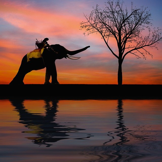 Silhouette, Elephant, Kids, Family, Tree, Seat, Sunset