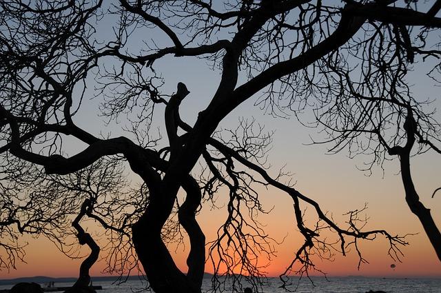 Tree, Back Light, Landscape, Sunset, Contrast