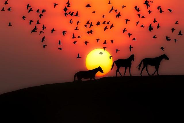 Sunset, Dusk, Silhouettes, Horses, Birds, Landscape