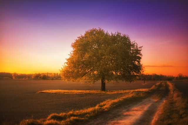 Tree, Landscape, Silent, Sunset, Afterglow, Colorful