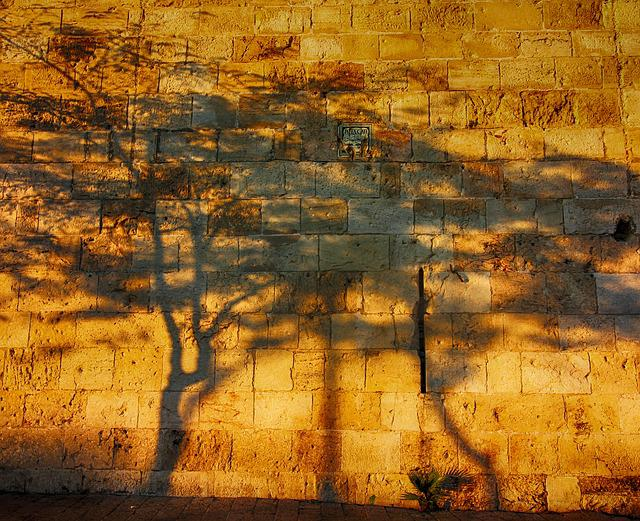 Shadows, Tree, Wall, Israel, Sun, Sunset, Light, Nature
