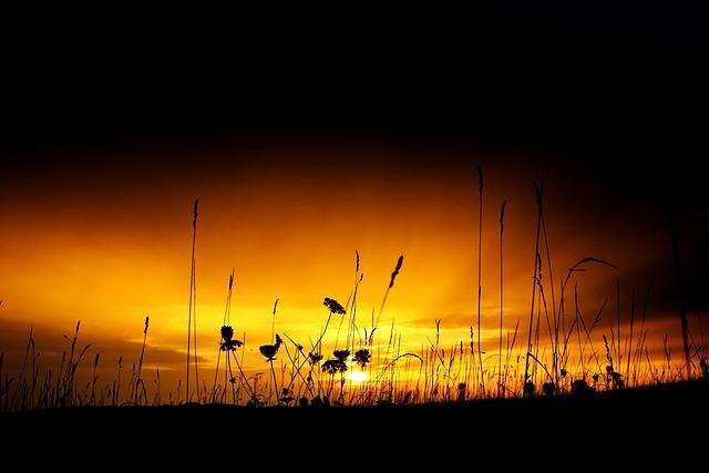 Sunset, Sky, Meadow, Sunlight, Grasses, Rest