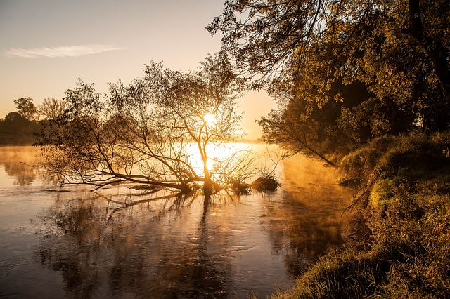 Nature, Dawn, Tree, Sunset, Reflection, Loire