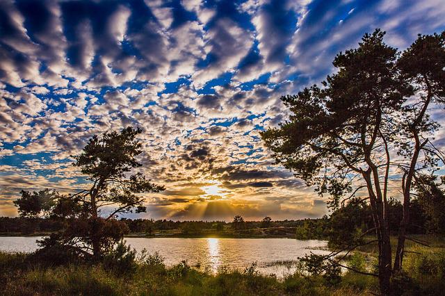 Sunset, Heide, Nature, Netherlands, Landscape