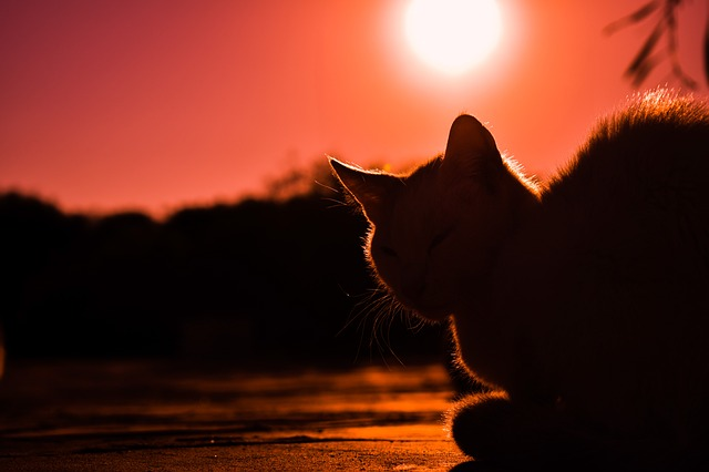 Sunset, Cat, Shadows, Silhouettes, Nature, Light