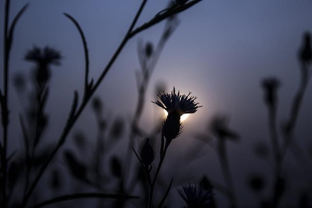 Outdoors, Nature, Sunset, Sky, Flora, Flower, Grass