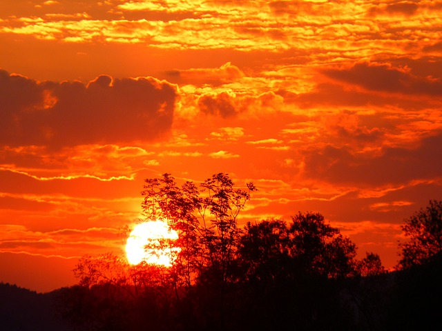 Sunset, Trees, Silhouette, Sun, Sunlight, Orange Sky