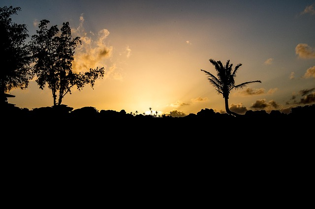 Maui Sunset, Sunset, Palm, Maui, Tropical, Landscape