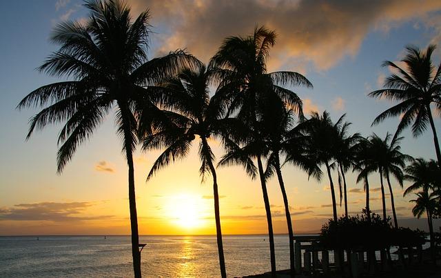 Sunset, Palm, Tropical, Paradise, Honolulu, Hawaii