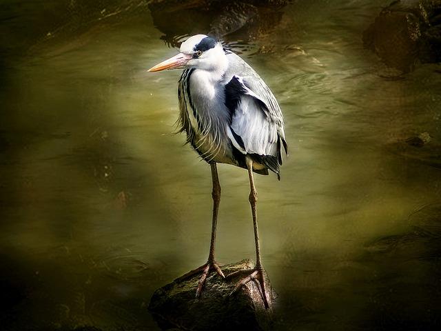 Rio, Bird, Heron, Sunset