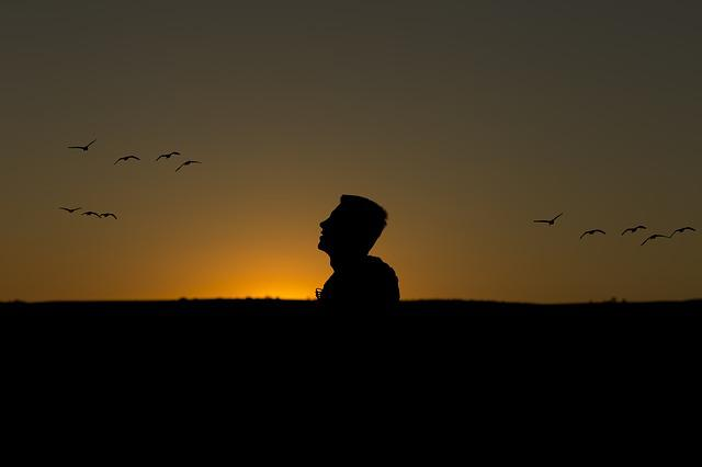 Day, Sunset, Birds, Silhouette, Male, Only