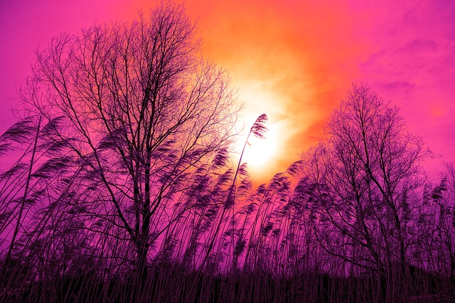 Reed, Tree, Landscape, Silhouette, Sunset, Sunset Skies