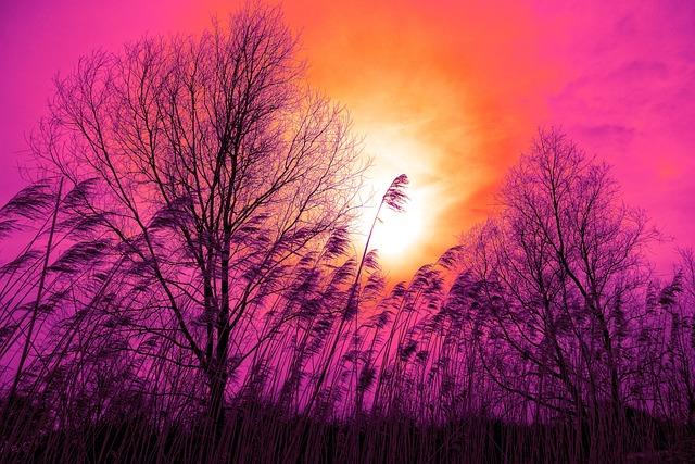 Reed, Tree, Landscape, Silhouette, Sunset, Sunset Skies