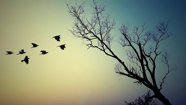 Tree, Nature, Silhouette, Landscape, Dawn, Sky, Sunset