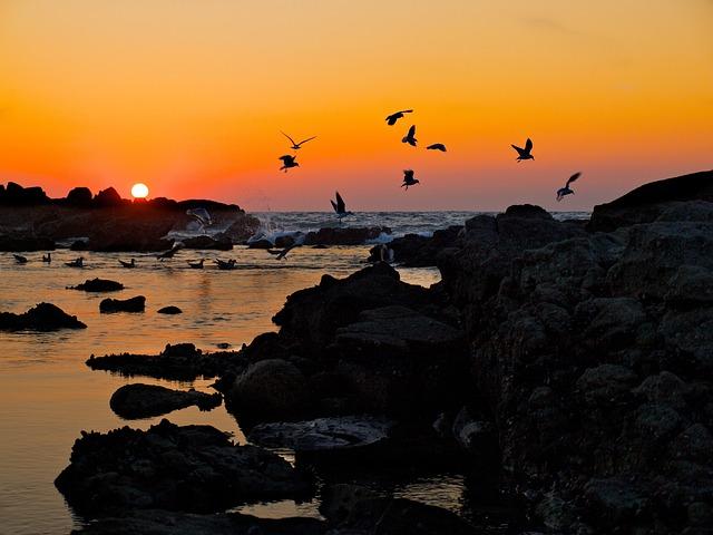 Baiona, Spain, Sunset, Seagulls, Water, Sea