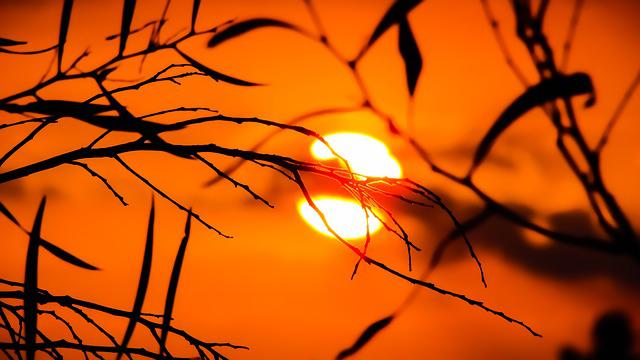 Branch, Sunset, Nature, Sunlight, Evening, Silhouettes