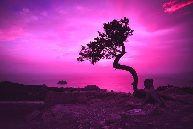 Sunset, Dusk, Evening, Twilight, Sky, Clouds, Tree