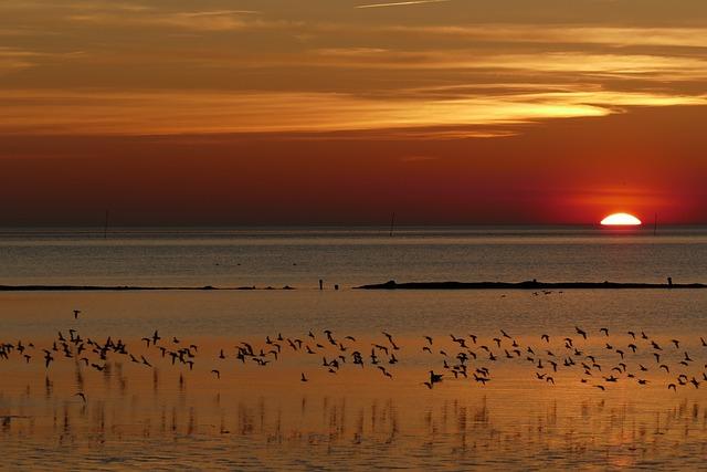 North Sea, Wadden Sea, Mecklenburg, Sunset, Sea