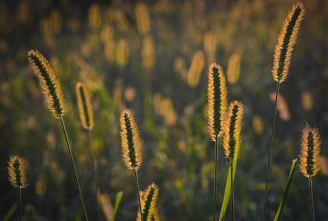 Grass, Sunset, Nature, The Sun, West, Landscape