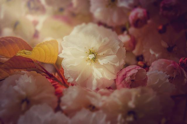 Spring, May, Nature, Bush, Bloom, Sunshine