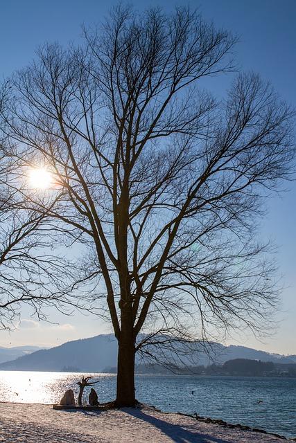 Tree, Lake, Sunshine, Nature, Backlighting, Atmosphere