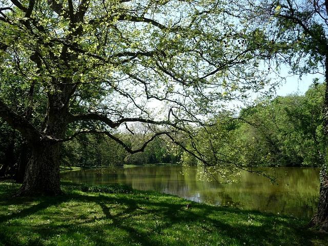 Pearl River, Wood, Water, Sunshine