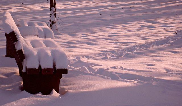 Nature, Winter, Sunshine, Cold, Snow, Wintry