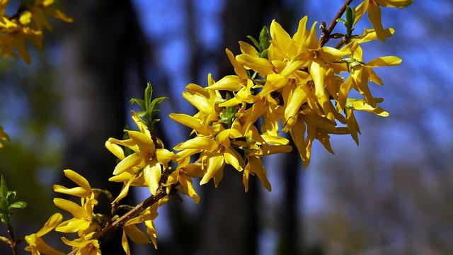 Spring, Spring Flowers, Sunshine