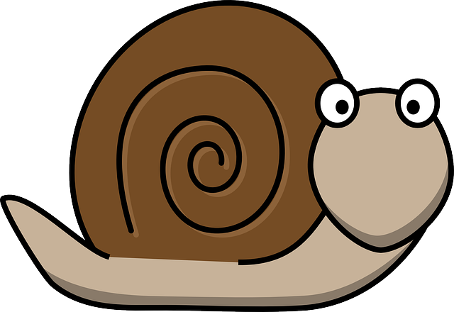 Snail, Animal, Fun, Surprised, Snail Shell, Shell