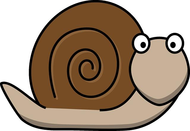Snail, Animal, Fun, Surprised, Snail Shell, Shell