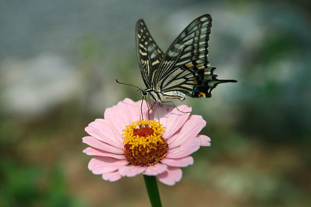 Butterfly, Flowers, Insects, Swallowtail, Forest