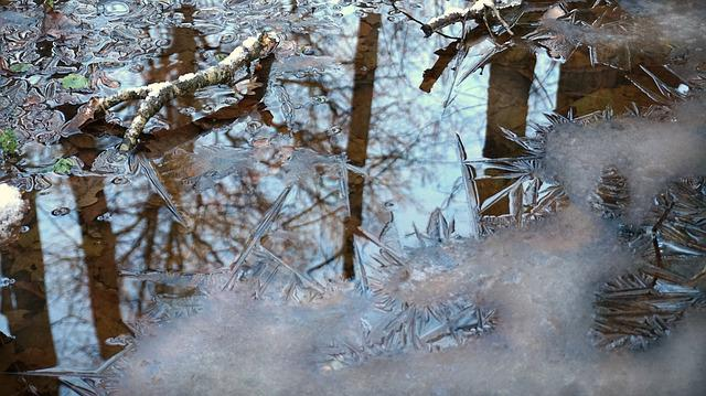 Early Winter, Crust, Forest, Swamp, Leafs, Grass, Ice