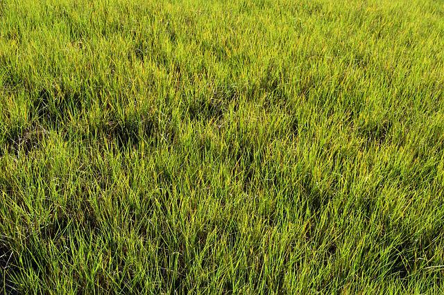 Swamp Grass, Wetland, Marsh, Florida, Background