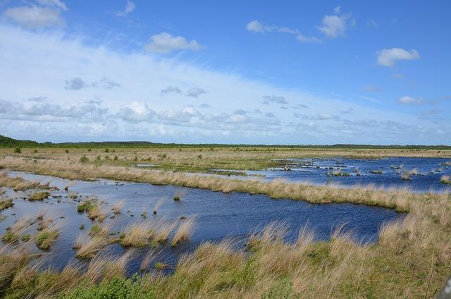 Moor, Swamp, Nature Conservation, Landscape, Nature
