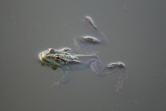 Frog, Amphibian, Water, Swamp, Pond