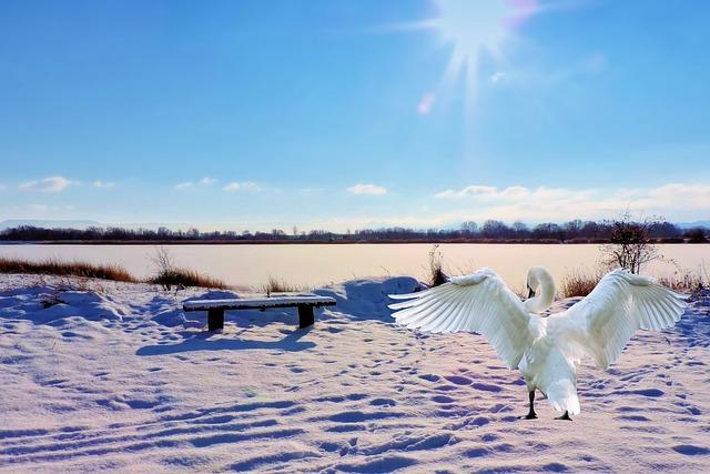 Landscape, Winter, Lake, Bank, Swan, Bench, Wintry