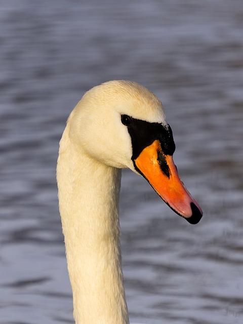 Bird, Waters, Swan, Animal World, Water Bird, Bill